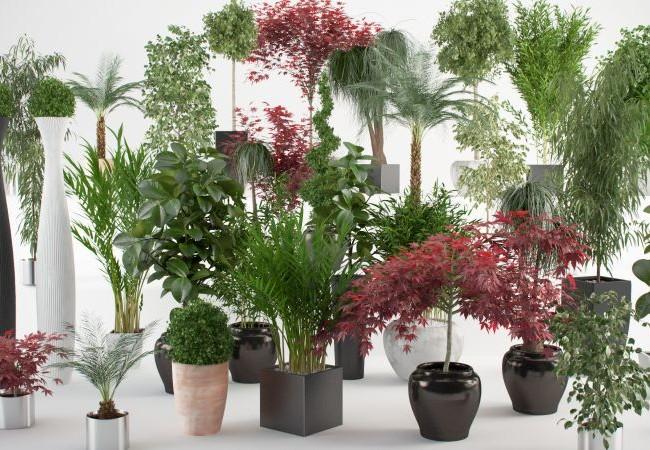 652x450_118744-cum-cureti-plantele-de-apartament-pentru-a-le-mentine-sanatoase-si-viguroase